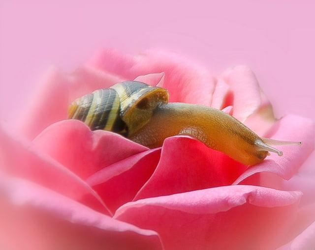 Les escargots 1585056