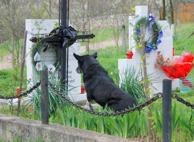 recueillement du chien 1462393