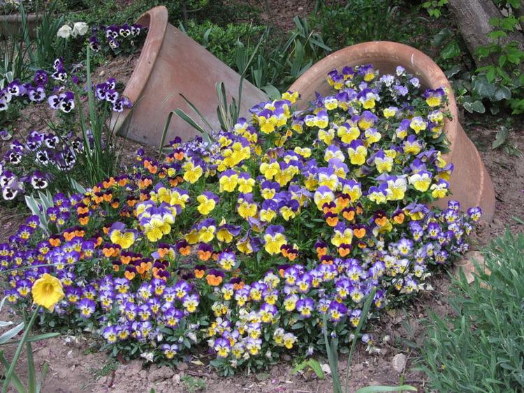 Jeudi 27 février  Pensees-fleurs-1819623591-1658773