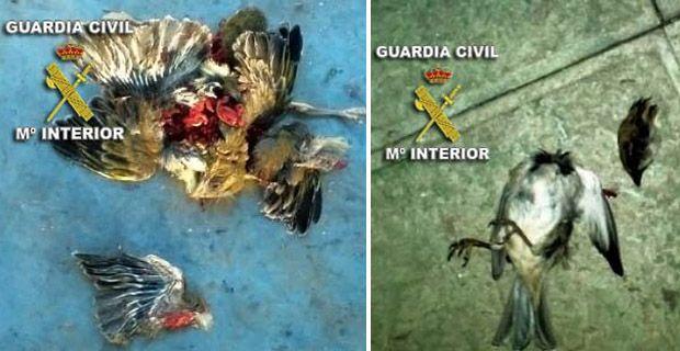 Detenidos por maltrato animal y difundir las imágenes en una red social Maltrato-animal-ciudad-real-red-social-default