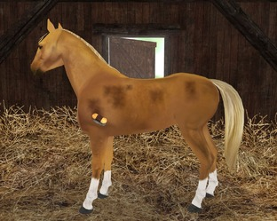 لعبة ركوب الخيل Planet Horse Planet-horse-pc-1300802048-011_m