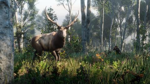Red Dead Redemption II : Un aperçu de la vie sauvage en images 1537948141-9801-capture-d-ecran