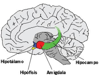 Bioquimica del Amol.l Emociones-localizacion-importancia-del-control-mental_24342_3_1
