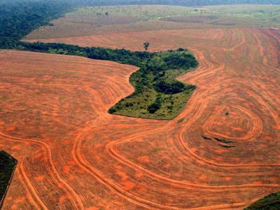 Brasil, desarrollo capitalista y ley de deforestación. 1312573323568deforestaciondn