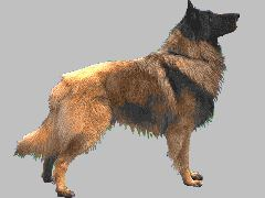 Que clase de perros te gustan a tí? 015