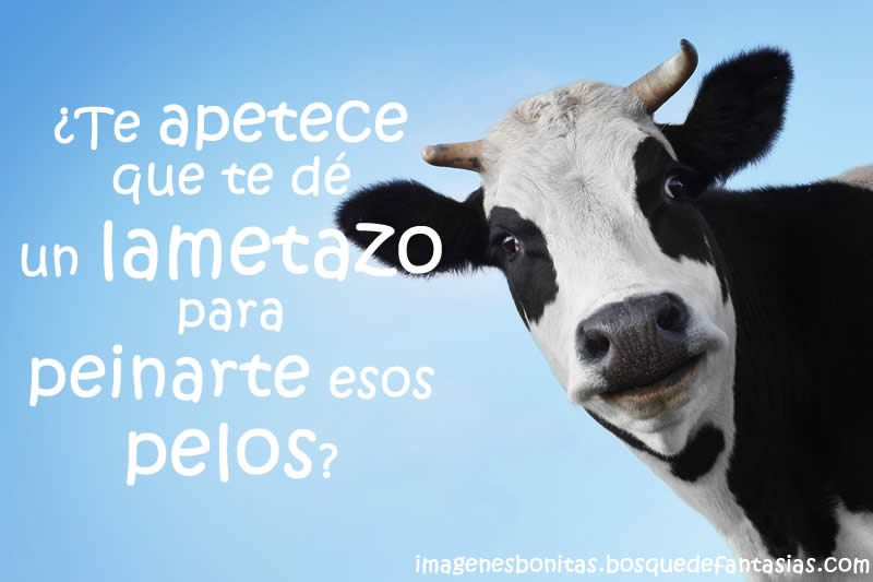 Bienvenidos al nuevo foro de apoyo a Noe #322 / 13.06.16 ~ 23.06.16 Imagen-chistosa-vaca-lametazo