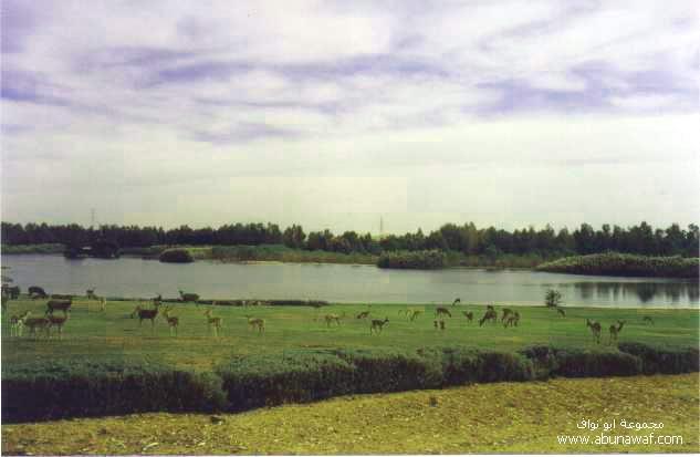 عکس -آرامش بخش از طبیعت W6w_200507131914590dc8732a
