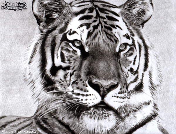 اروع لوحات الفحم Tiger