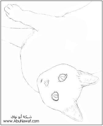 كيف  ترسم قطه  3ssaaw