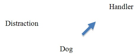 AKC Good Canine Citizen / CGC Advanced - Page 2 Recall_with_distractions_diagram