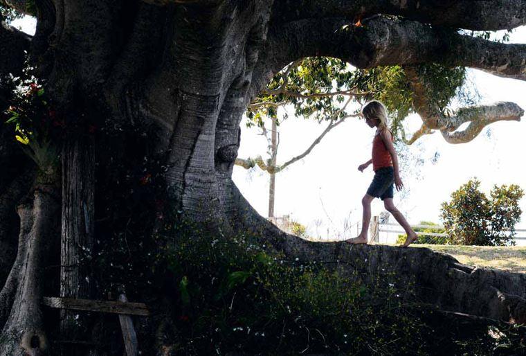 The Tree 19458335