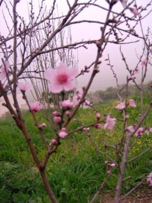 مناظر طبيعية من بلدة عرابة : طريق نابلس 2575591581