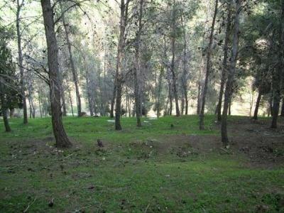 مناظر طبيعية من بلدة عرابة : طريق نابلس 25755915811