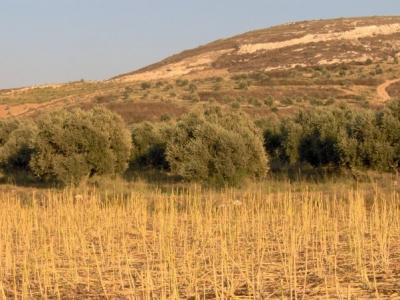 مناظر طبيعية من بلدة عرابة : طريق نابلس 2575591583
