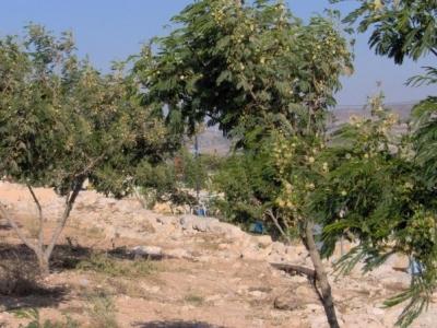 مناظر طبيعية من بلدة عرابة : طريق نابلس 2575591584