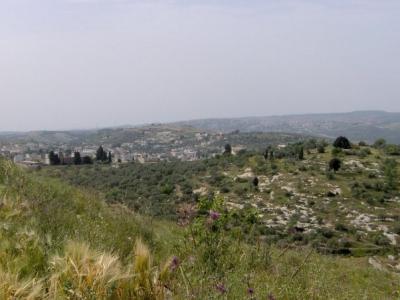 مناظر طبيعية من بلدة عرابة : طريق نابلس 2575591587