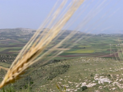 مناظر طبيعية من بلدة عرابة : طريق نابلس 2575591588