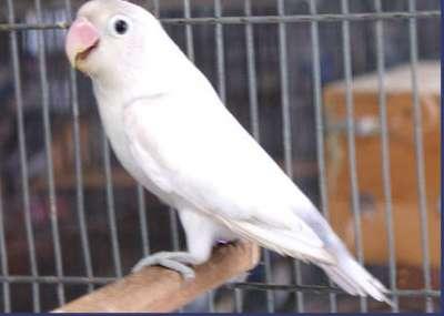 مجموعة من الصور لطيور الحب 3909760500
