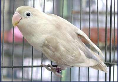 مجموعة من الصور لطيور الحب 3909760502