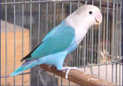 مجموعة من الصور لطيور الحب 3909760504