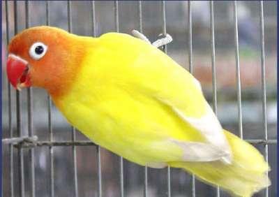 مجموعة من الصور لطيور الحب 3909760506