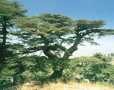 صور ومناظر طبيعية من لبنان 3909772540