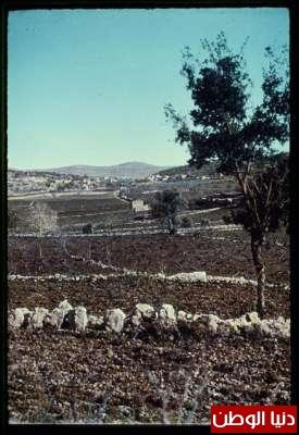 مكتبة نكبة فلسطين - صفحة 2 3909775466