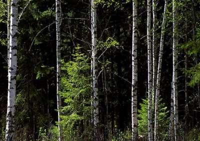 صور ومناظر طبيعية من السويد 3909779338