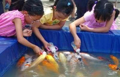 أسماك ترضع من رضاعات الاطفال ..صور و فيديو 3909781871