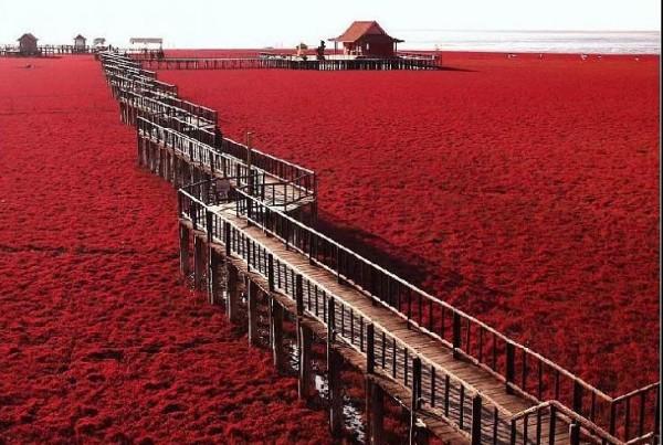 شاطىء الأحمر فى الصين  3909979992