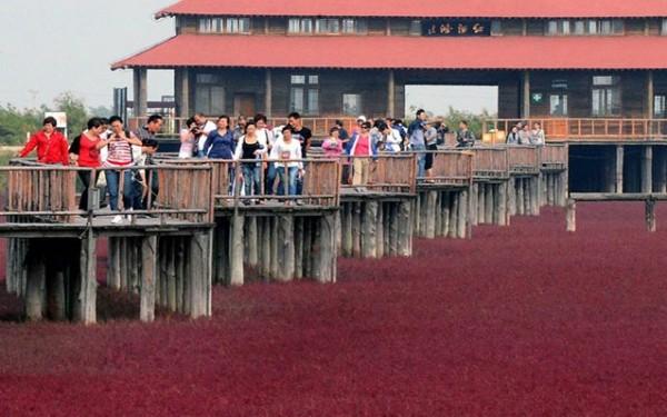 شاطىء الأحمر فى الصين  3909979993