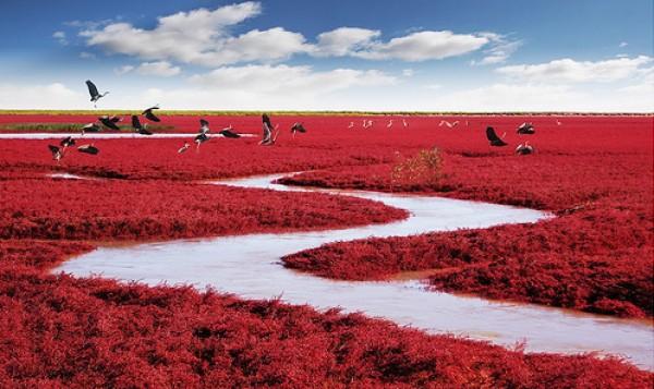 شاطىء الأحمر فى الصين  3909979994