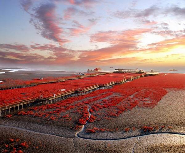 شاطىء الأحمر فى الصين  3909979996
