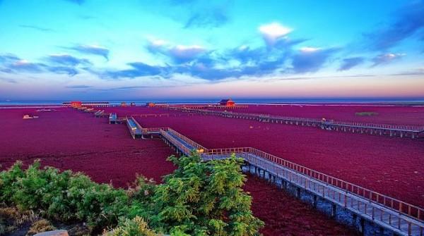 شاطىء الأحمر فى الصين  3909979997