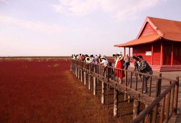 شاطىء الأحمر فى الصين  3909980000