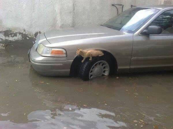الامطار تغرق البلاد 5-12-2013 3910049337