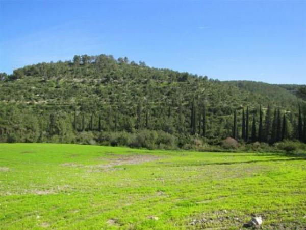 جبل الشيخ في فلسطين 3910079344