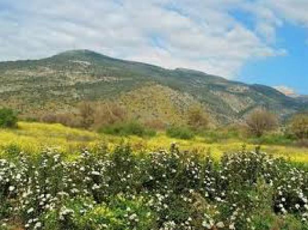 جبل الشيخ في فلسطين 3910079353