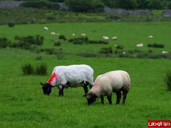 طبيعة ايرلندا -بدون مكياج 3910156726
