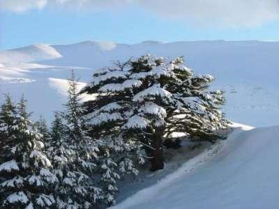 صور ومناظر طبيعية من لبنان 9998305852