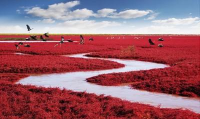 شاطىء الأحمر فى الصين  9998401289