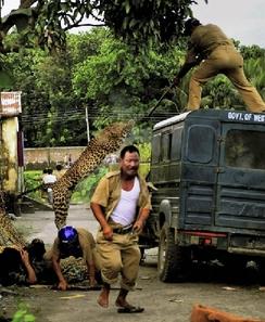 بالصور و الفيديو… فهد يهاجم ستة فلاحين في الهند 17