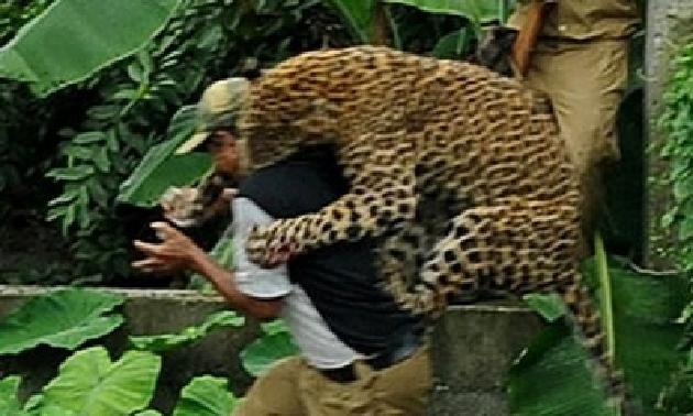 بالصور و الفيديو… فهد يهاجم ستة فلاحين في الهند 41
