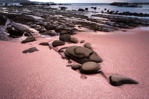 هل تعلم ما هو سر الشاطئ القرنفلي في جزر البهاما؟ 984818011