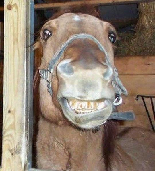 ابتسم من فضلك! 001143210a6b0fd169591c