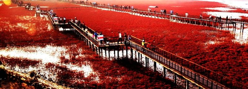 La Playa Roja de Panjin 001ec949faf1158383f33d