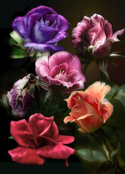 Lule dhe vetëm lule! 31838
