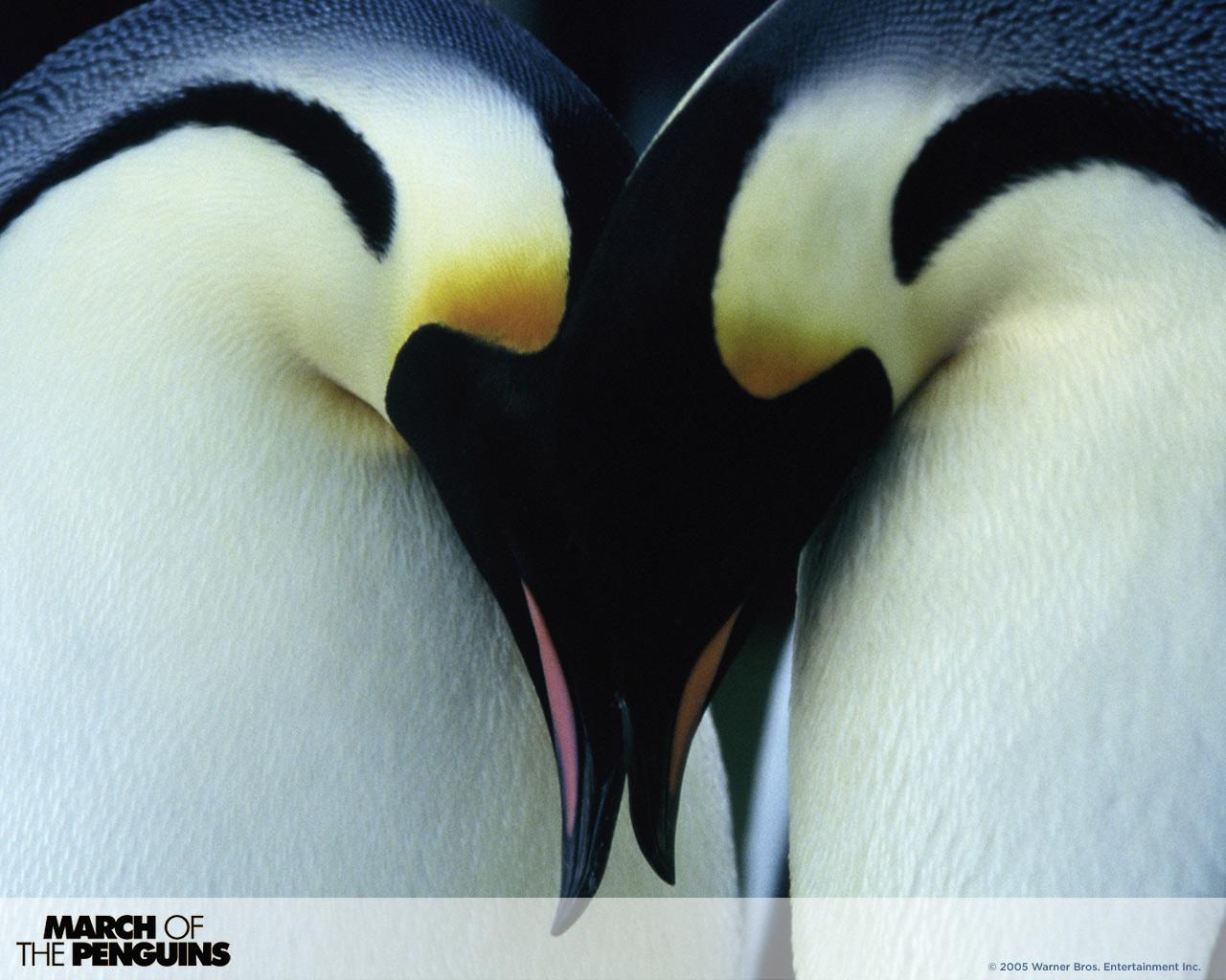 [Disneynature] La Marche de l'Empereur (2004) March-of-the-Penguins-WPs-penguins-157194_1280_1024