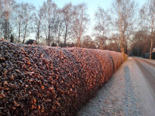 Роскошные пейзажи Норвегии - Страница 2 Snowless-winter-in-Oslo-norway-536839_500_375