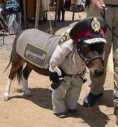 تحميل حمار اخواني اسم السيسي!      Donkey